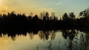 puita heijastuu iltaruskossa veden pintaan