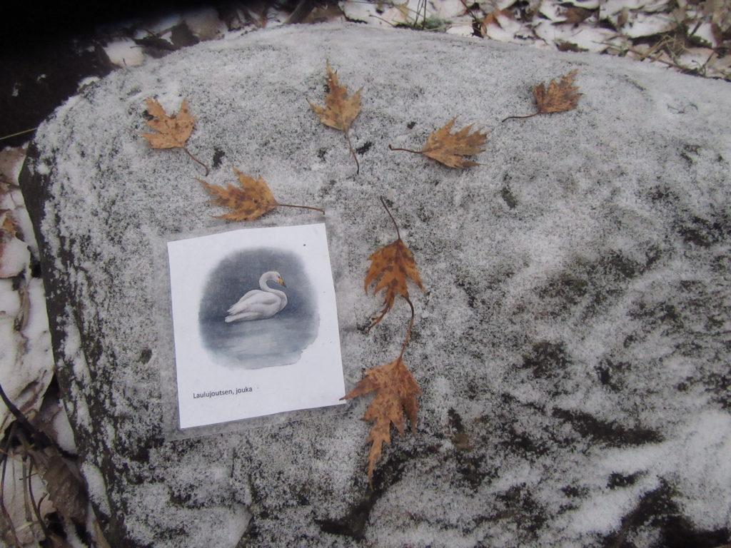 Joutsenen kuva ja ruskeita lehtiä joutsenen tähtikuvion muodossa lumisella kivellä.